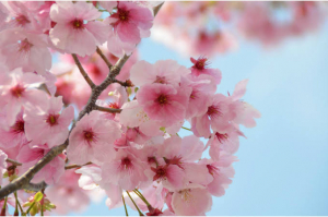 春日和♡写真
